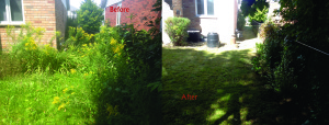 Before and After photos of a Rear yard cleanup